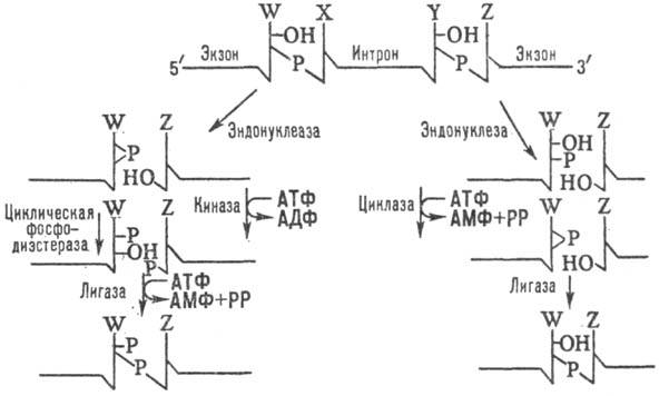 http://www.pora.ru/image/encyclopedia/2/7/4/13274.jpeg