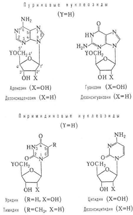 http://www.pora.ru/image/encyclopedia/3/3/2/9332.jpeg