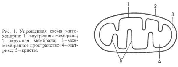 http://www.pora.ru/image/encyclopedia/4/4/9/9449.jpeg