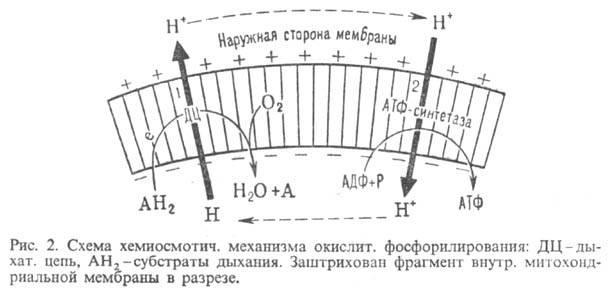 http://www.pora.ru/image/encyclopedia/4/5/2/9452.jpeg