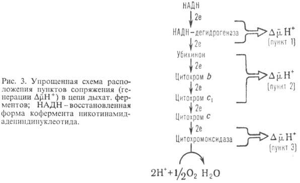 http://www.pora.ru/image/encyclopedia/4/7/0/9470.jpeg