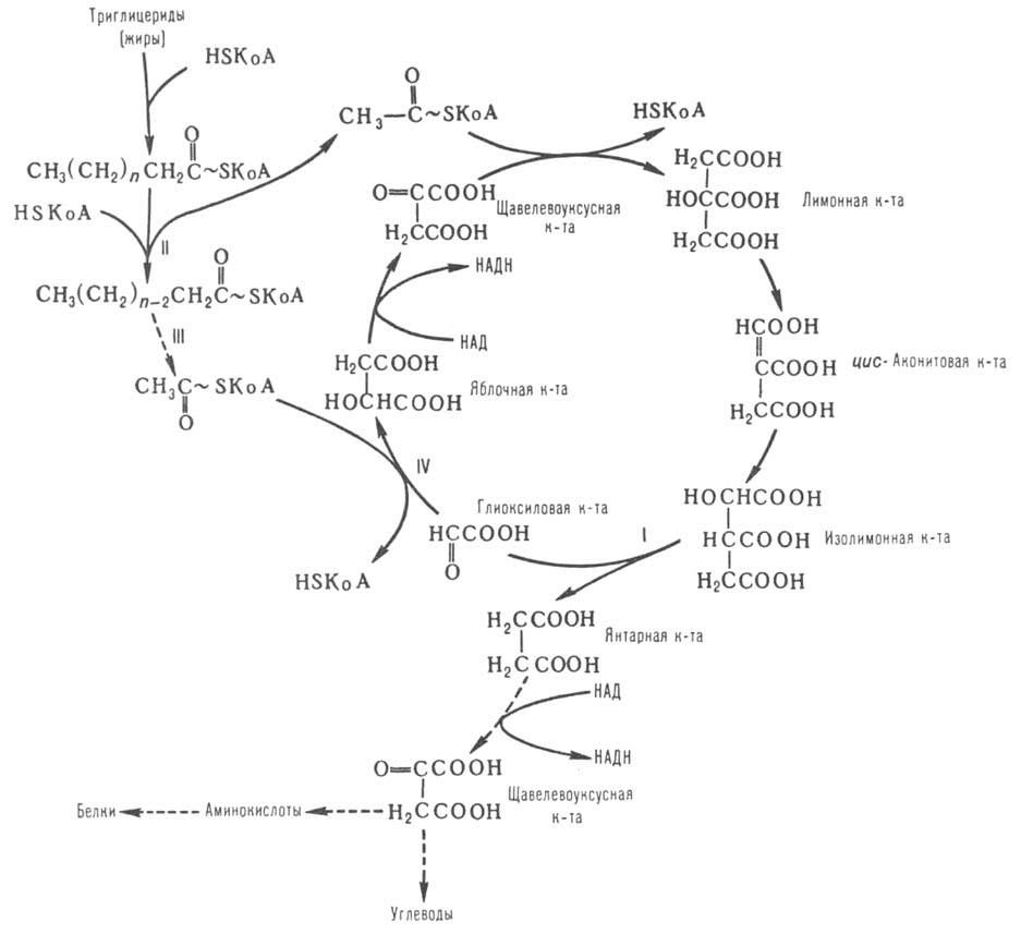 http://www.pora.ru/image/encyclopedia/7/1/6/5716.jpeg