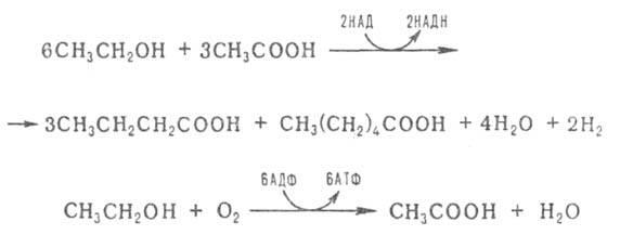 http://www.pora.ru/image/encyclopedia/7/2/2/3722.jpeg