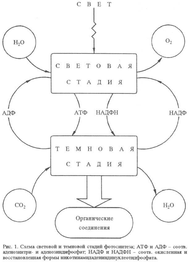 http://www.pora.ru/image/encyclopedia/8/5/6/15856.jpeg