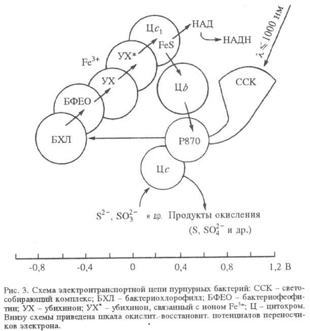 http://www.pora.ru/image/encyclopedia/8/6/1/15861.jpeg