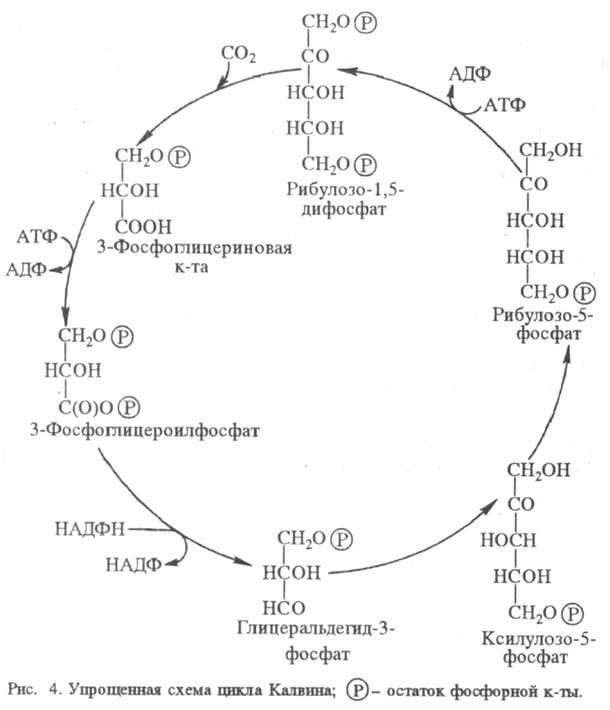 http://www.pora.ru/image/encyclopedia/8/6/2/15862.jpeg