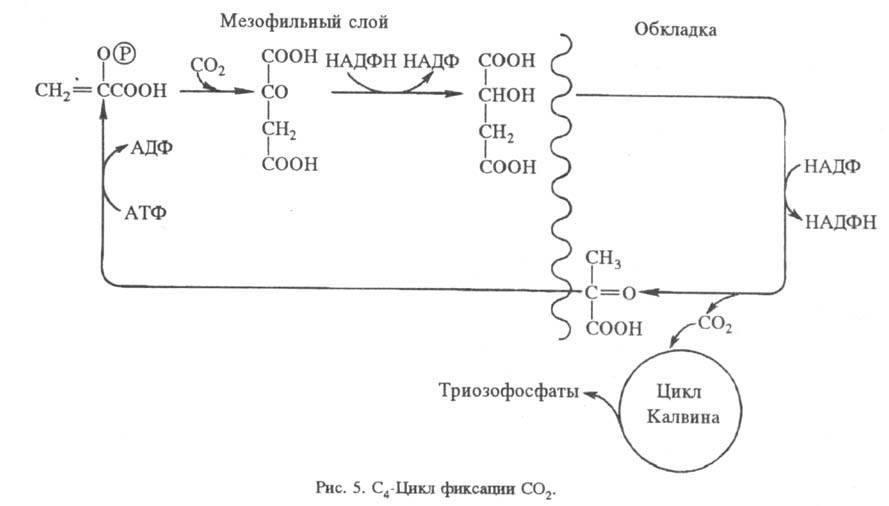 http://www.pora.ru/image/encyclopedia/8/6/3/15863.jpeg