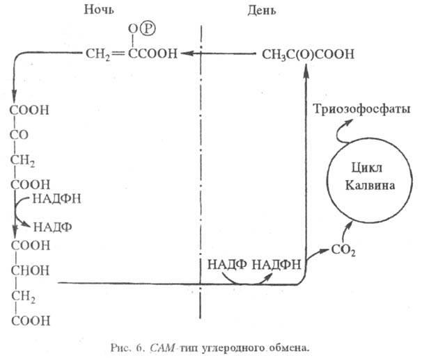 http://www.pora.ru/image/encyclopedia/8/6/4/15864.jpeg
